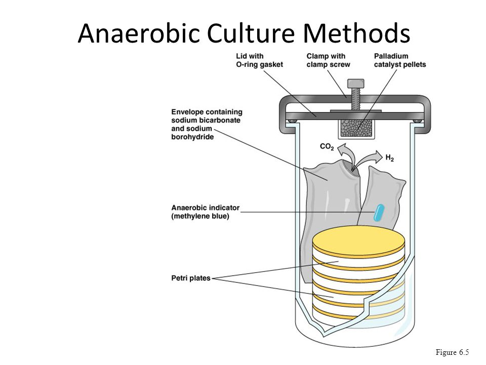 Anaerobic Culture Methods