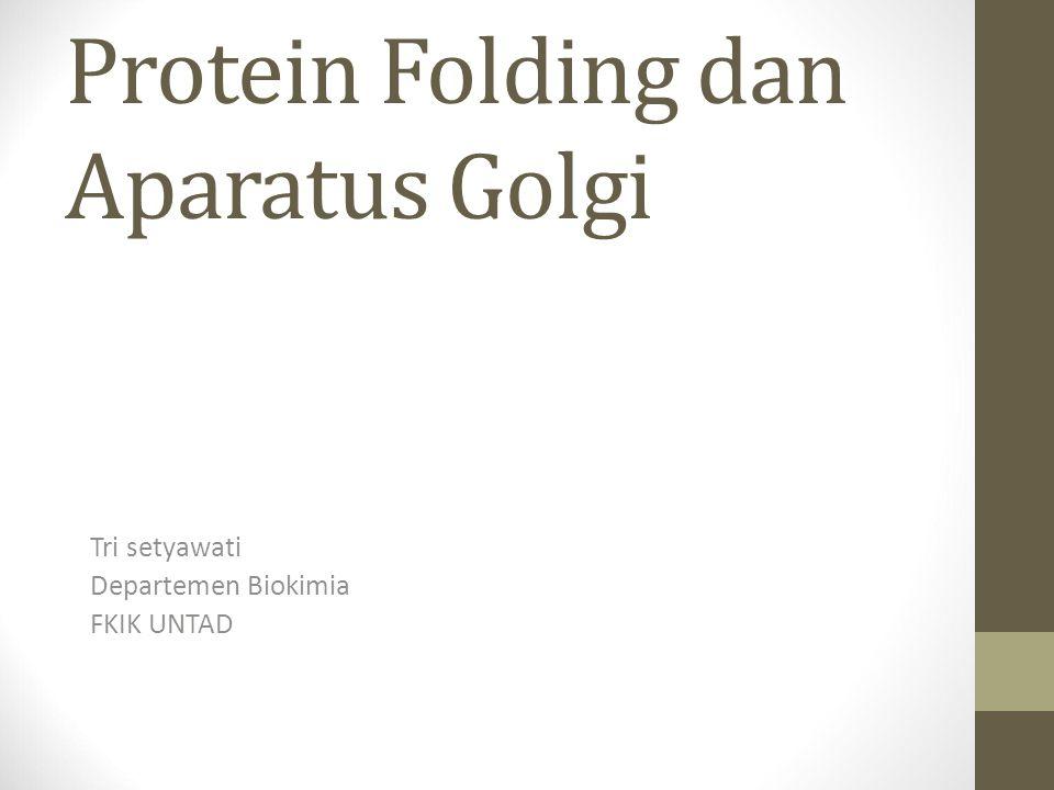 Protein Folding dan Aparatus Golgi