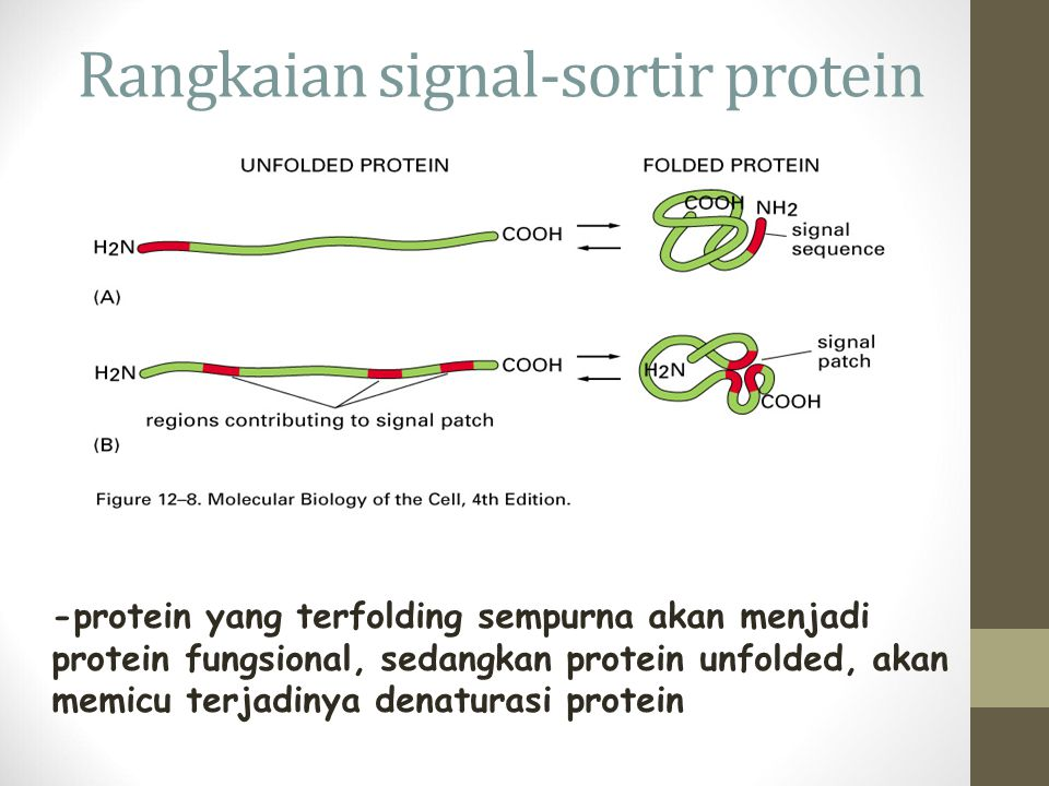 Rangkaian signal-sortir protein