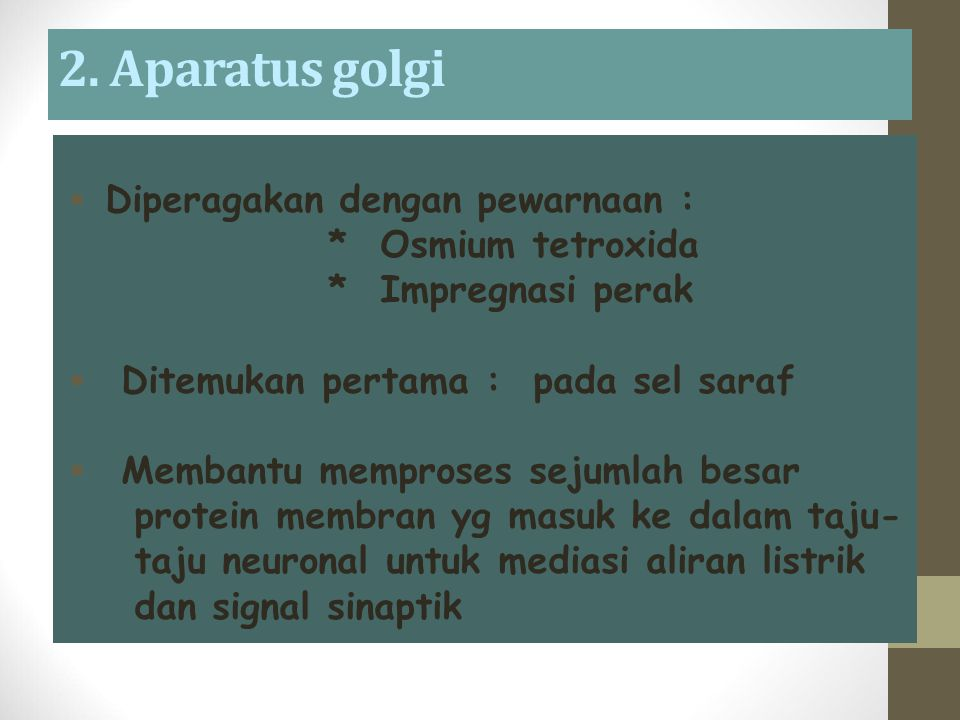 2. Aparatus golgi Diperagakan dengan pewarnaan : * Osmium tetroxida
