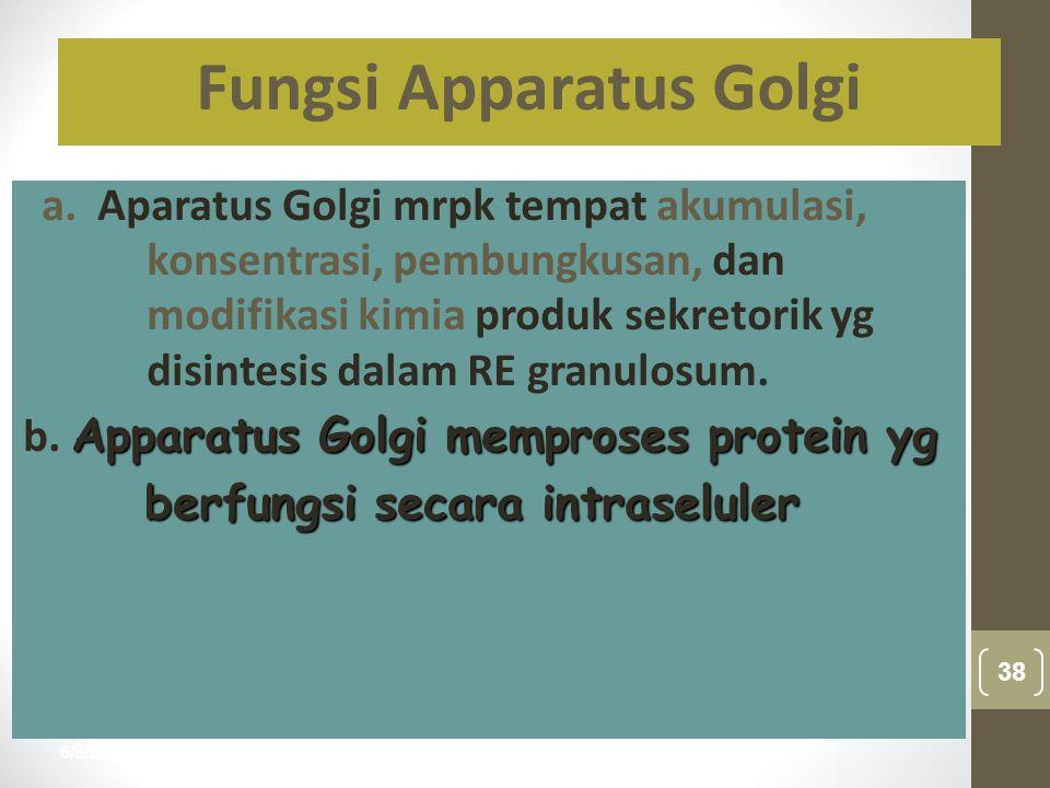 Fungsi Apparatus Golgi