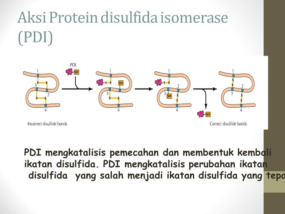Aksi Protein disulfida isomerase (PDI)