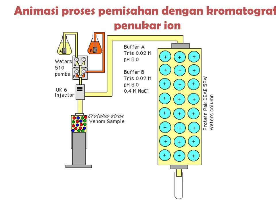 Animasi proses pemisahan dengan kromatografi penukar ion