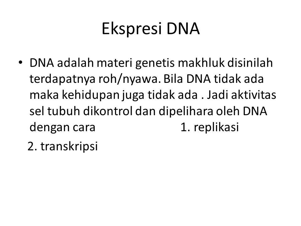 Ekspresi DNA