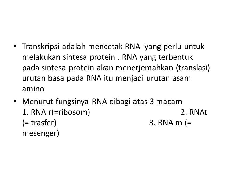Transkripsi adalah mencetak RNA yang perlu untuk melakukan sintesa protein . RNA yang terbentuk pada sintesa protein akan menerjemahkan (translasi) urutan basa pada RNA itu menjadi urutan asam amino