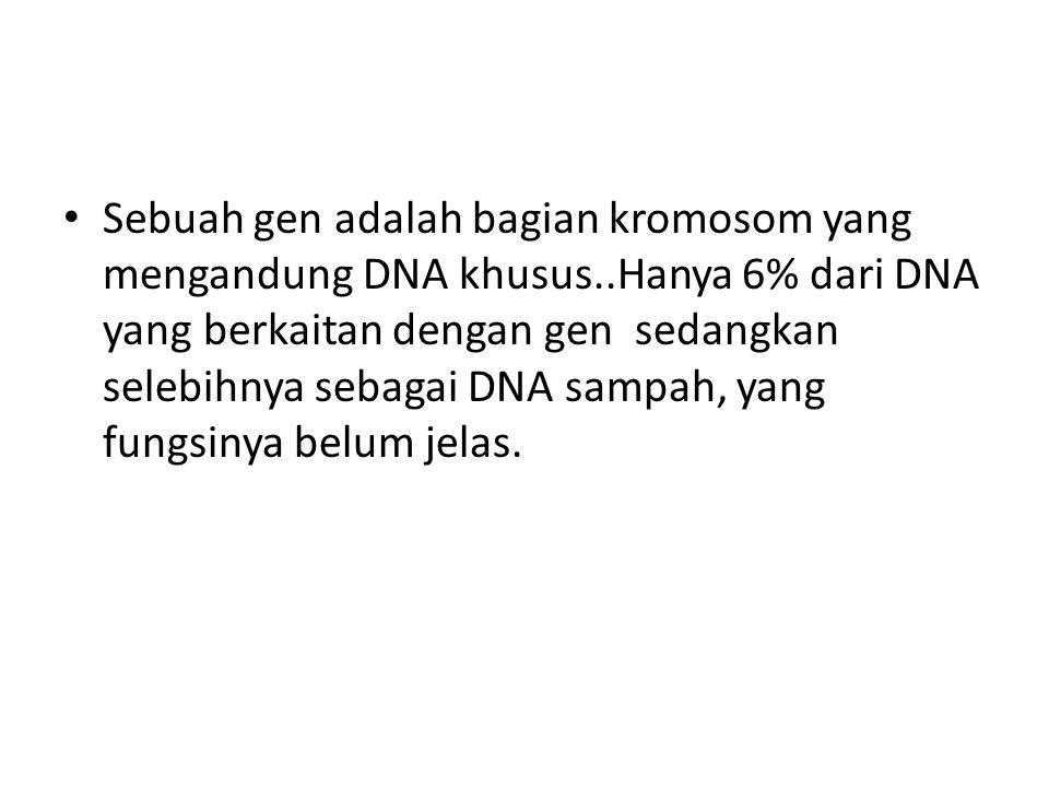 Sebuah gen adalah bagian kromosom yang mengandung DNA khusus