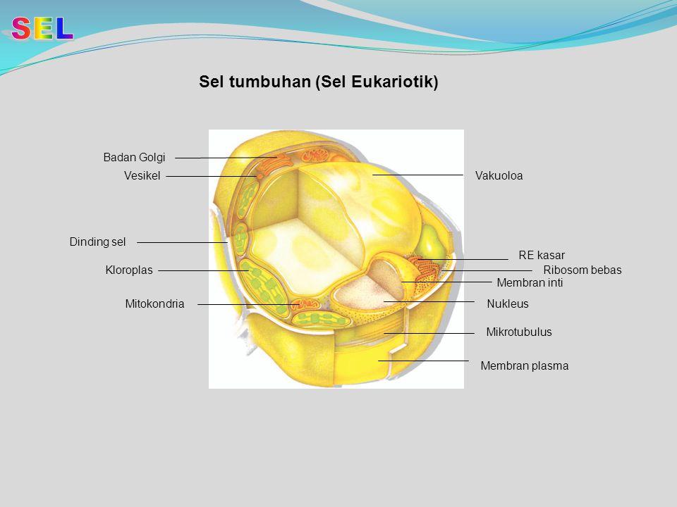 SEL Sel tumbuhan (Sel Eukariotik) Badan Golgi Vesikel Vakuoloa