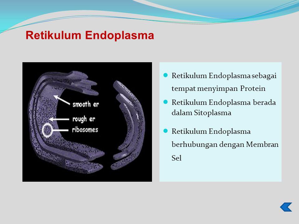 Retikulum Endoplasma Retikulum Endoplasma sebagai tempat menyimpan Protein. Retikulum Endoplasma berada dalam Sitoplasma.