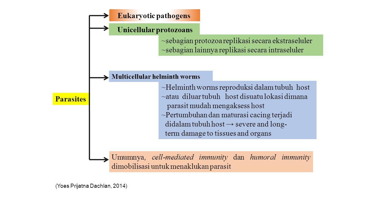 Unicellular protozoans