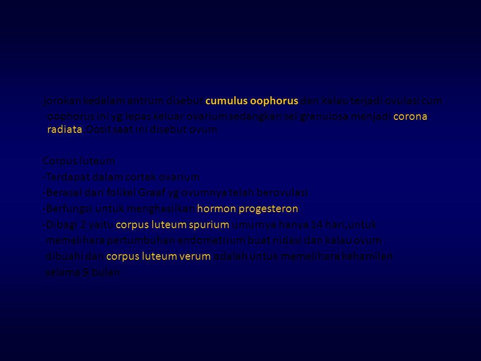 jorokan kedalam antrum disebut cumulus oophorus dan kalau terjadi ovulasi cum oophorus ini yg lepas keluar ovarium sedangkan sel granulosa menjadi corona radiata.Oosit saat ini disebut ovum