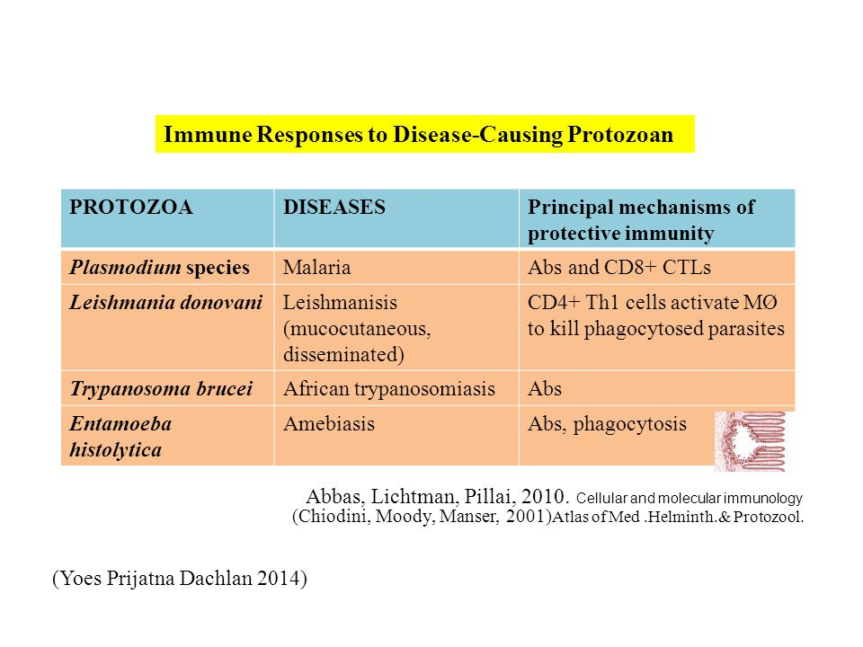 Immune Responses to Disease-Causing Protozoan