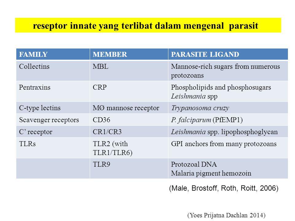 reseptor innate yang terlibat dalam mengenal parasit