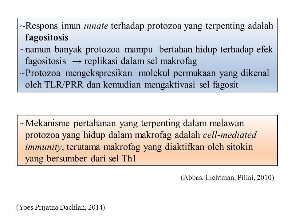 ~Respons imun innate terhadap protozoa yang terpenting adalah