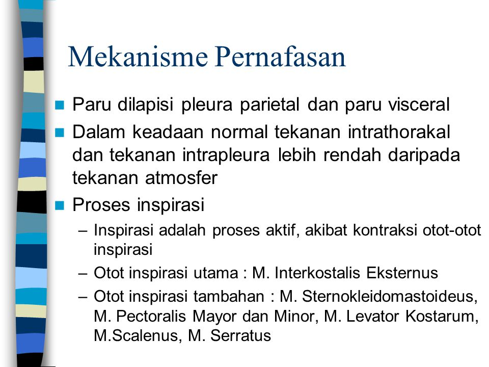 Mekanisme Pernafasan Paru dilapisi pleura parietal dan paru visceral