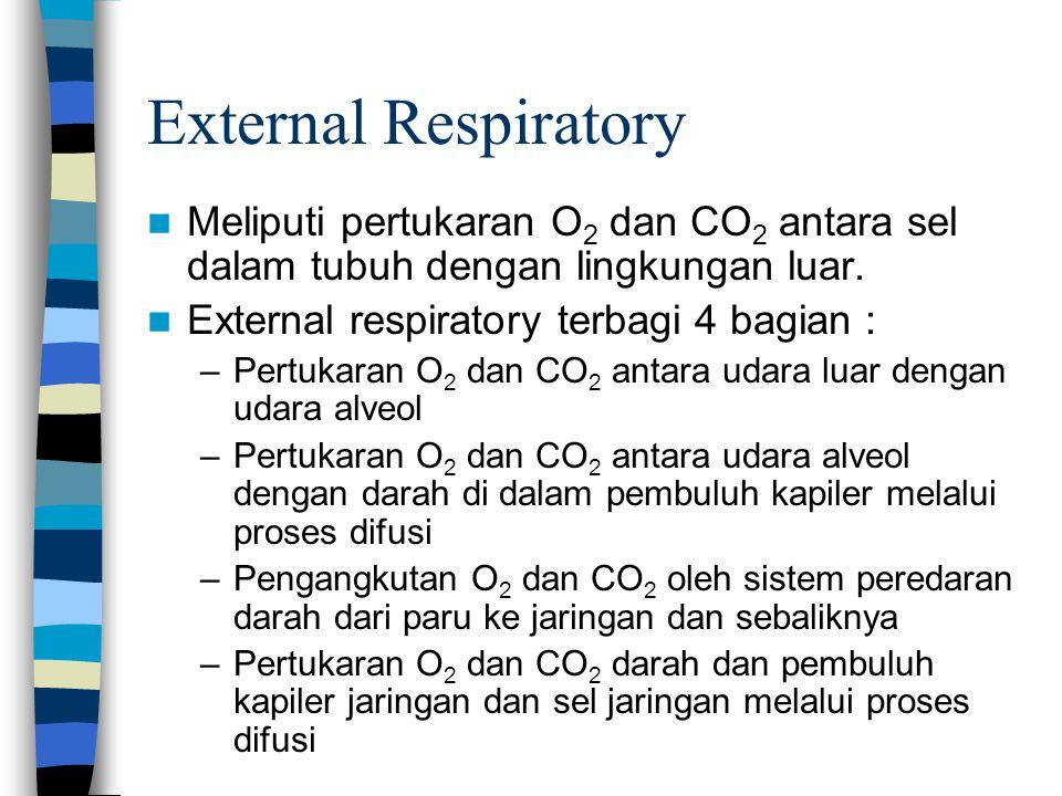 External Respiratory Meliputi pertukaran O2 dan CO2 antara sel dalam tubuh dengan lingkungan luar. External respiratory terbagi 4 bagian :