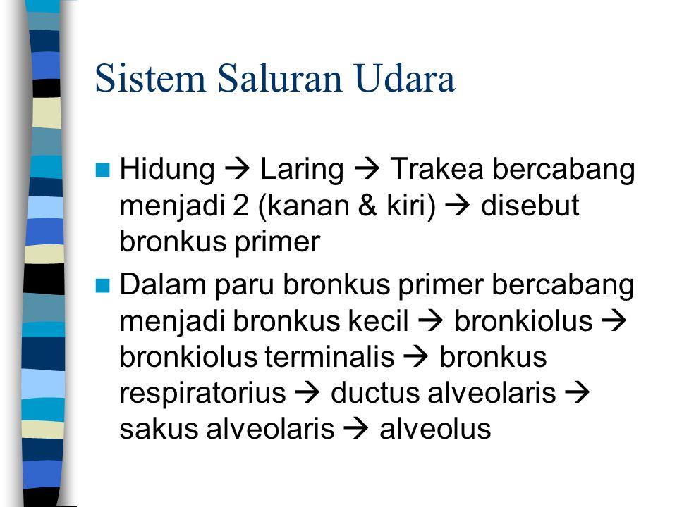 Sistem Saluran Udara Hidung  Laring  Trakea bercabang menjadi 2 (kanan & kiri)  disebut bronkus primer.
