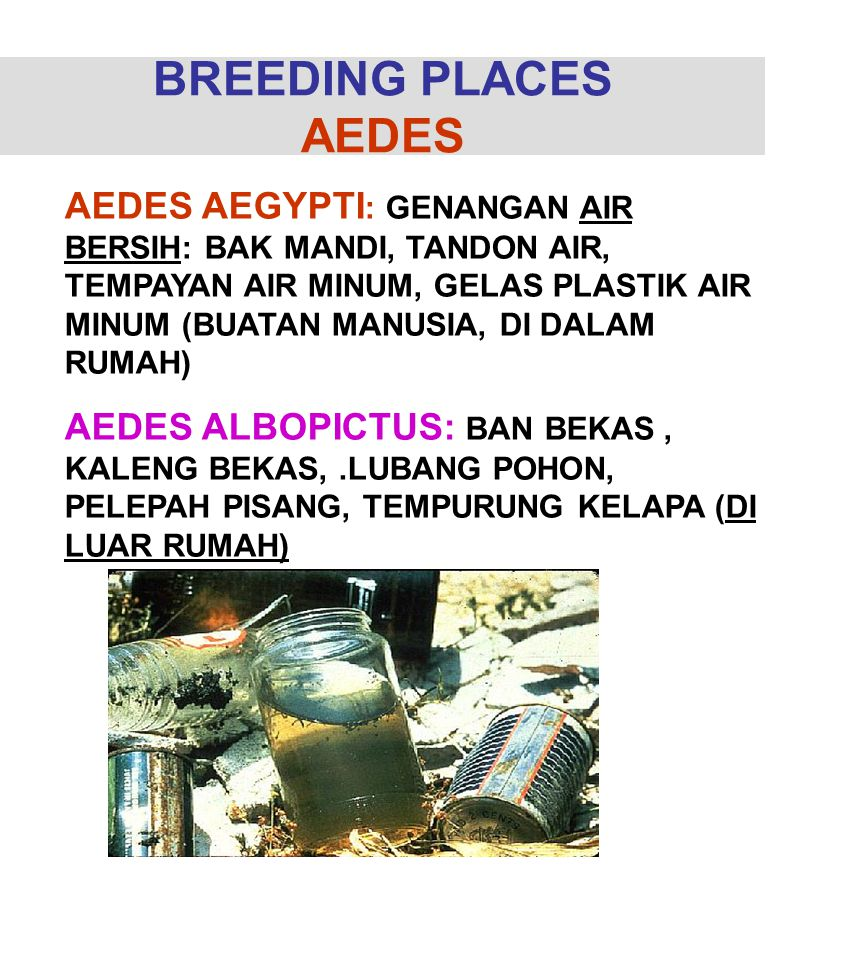 BREEDING PLACES AEDES