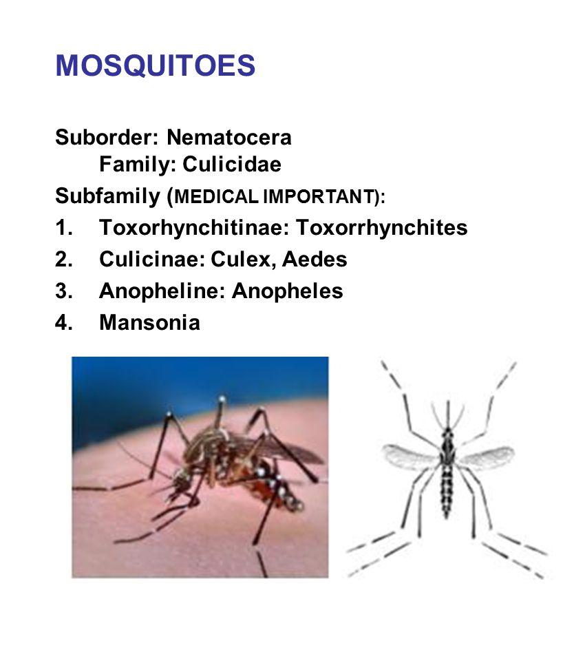 MOSQUITOES Suborder: Nematocera Family: Culicidae