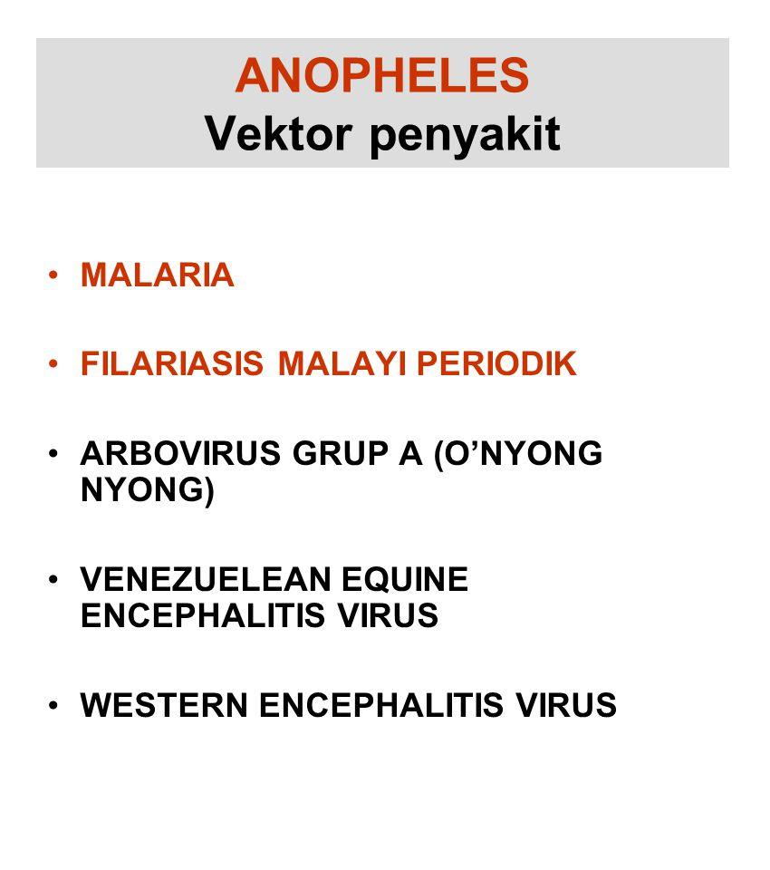 ANOPHELES Vektor penyakit