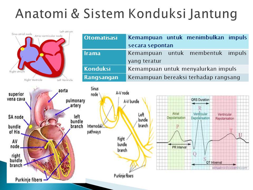 Anatomi & Sistem Konduksi Jantung