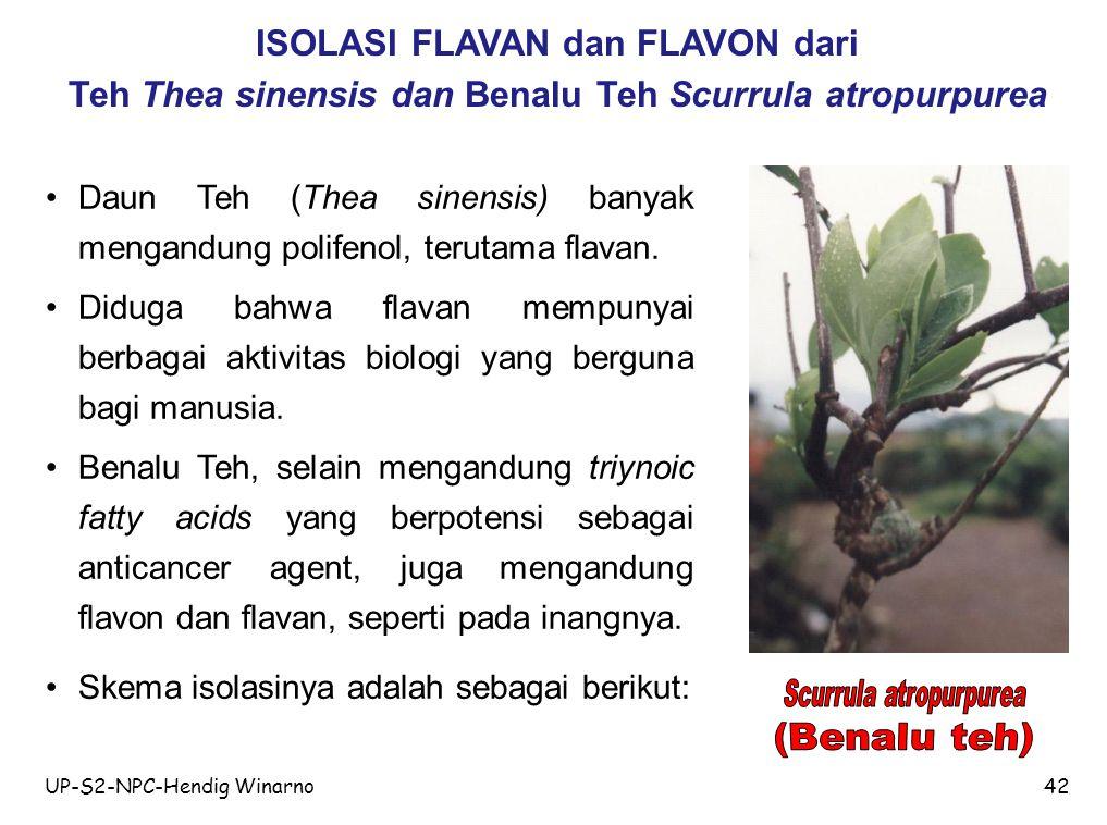ISOLASI FLAVAN dan FLAVON dari