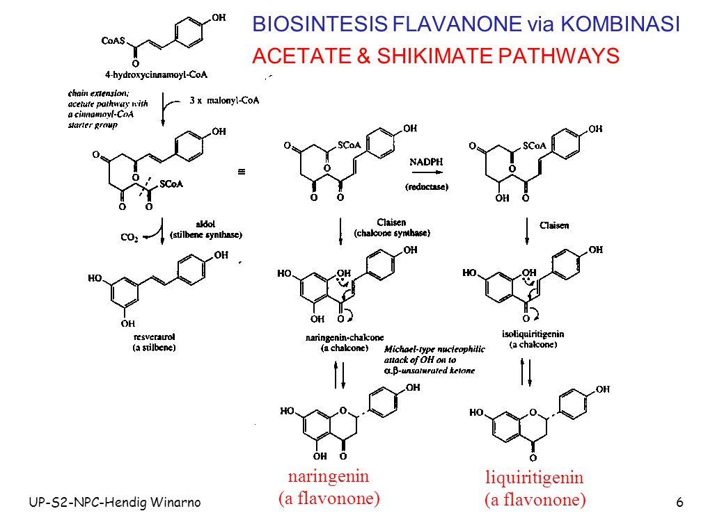 BIOSINTESIS FLAVANONE via KOMBINASI ACETATE & SHIKIMATE PATHWAYS