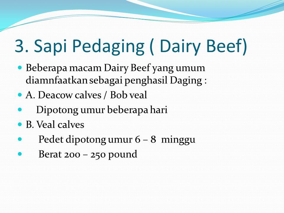 3. Sapi Pedaging ( Dairy Beef)