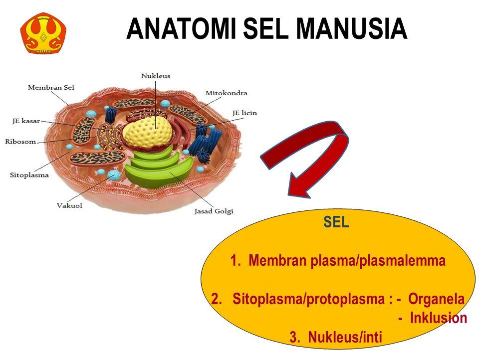 1. Membran plasma/plasmalemma Sitoplasma/protoplasma : - Organela