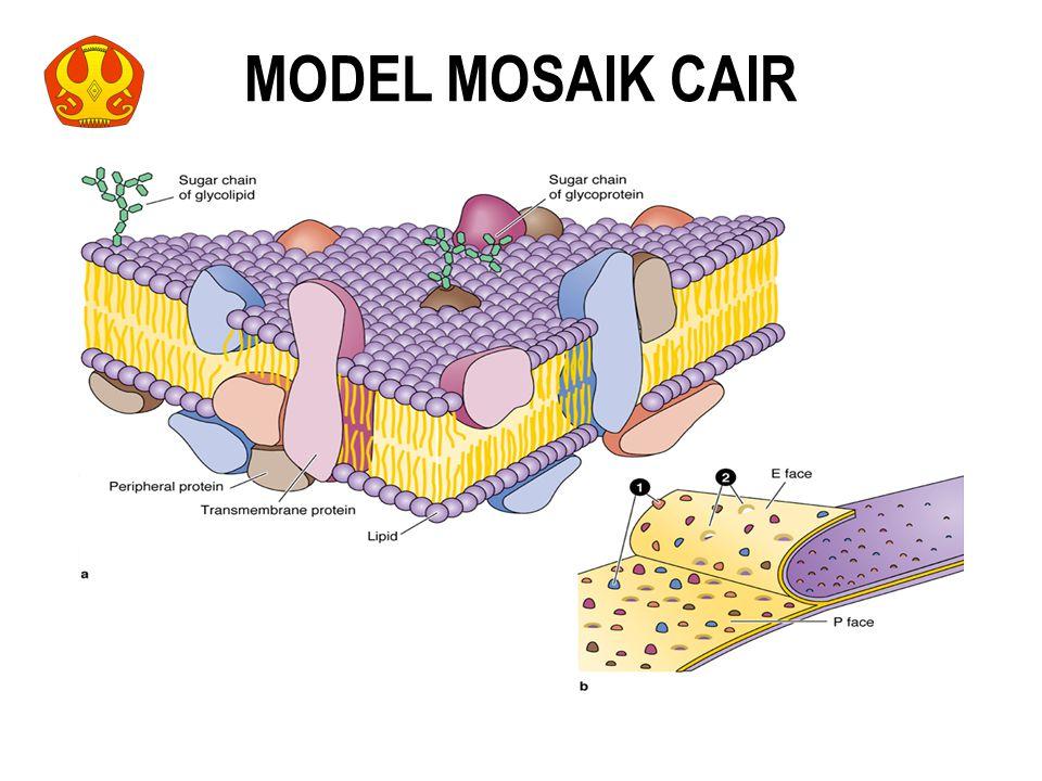 MODEL MOSAIK CAIR