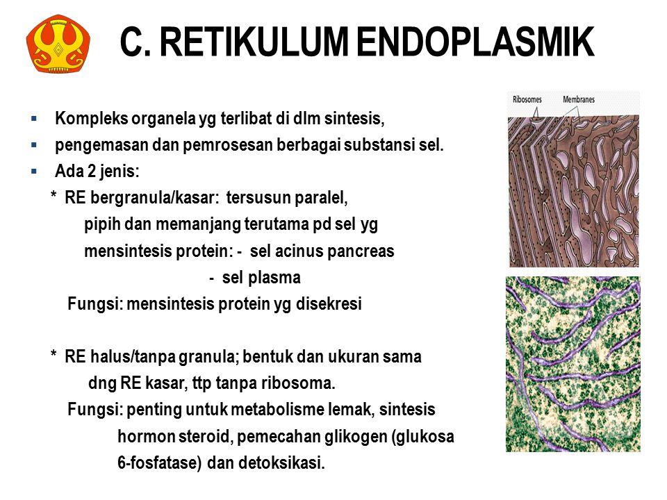 C. RETIKULUM ENDOPLASMIK