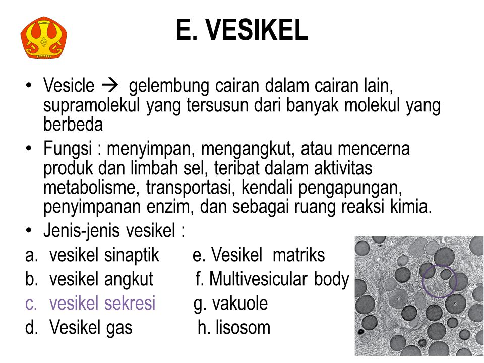 E. VESIKEL Vesicle  gelembung cairan dalam cairan lain, supramolekul yang tersusun dari banyak molekul yang berbeda.