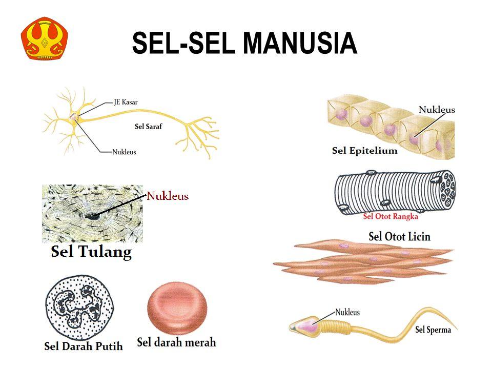 SEL-SEL MANUSIA