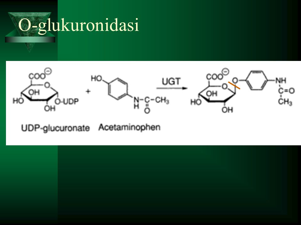 O-glukuronidasi