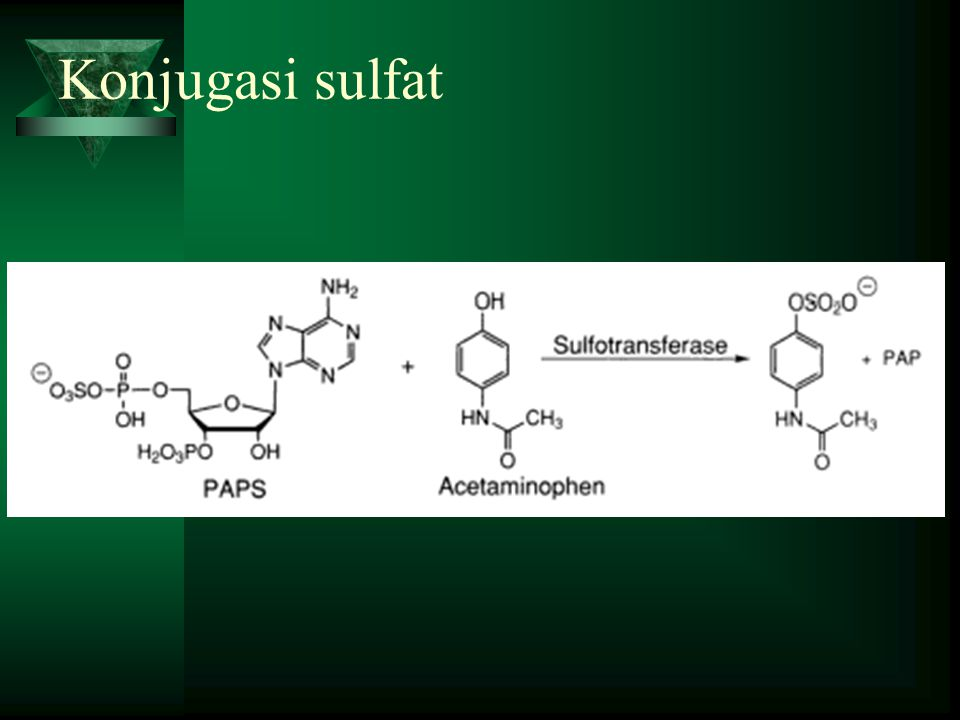 Konjugasi sulfat
