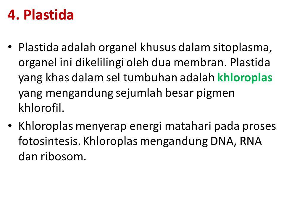 4. Plastida