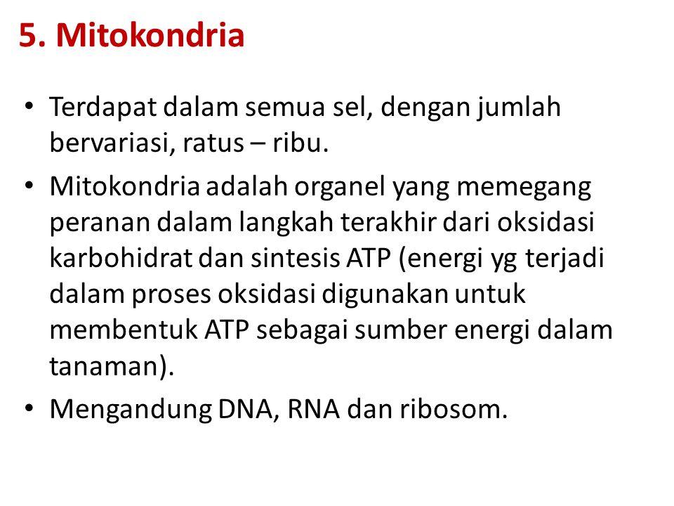 5. Mitokondria Terdapat dalam semua sel, dengan jumlah bervariasi, ratus – ribu.