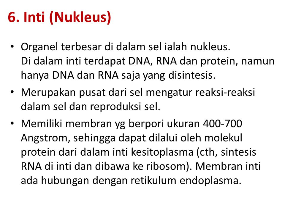 6. Inti (Nukleus)