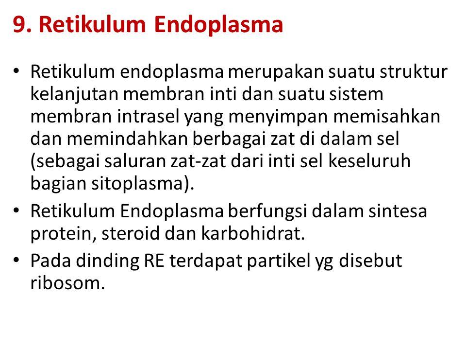 9. Retikulum Endoplasma