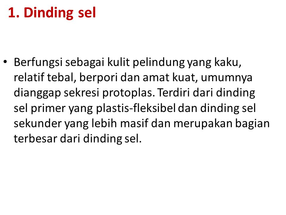 1. Dinding sel