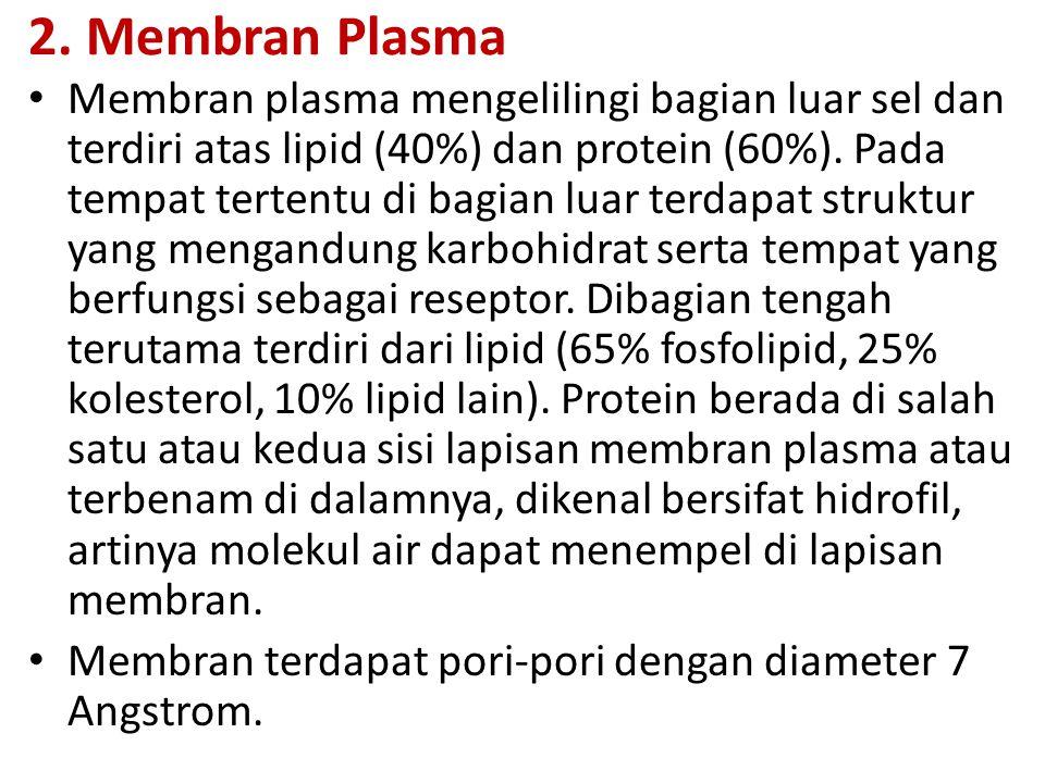 2. Membran Plasma