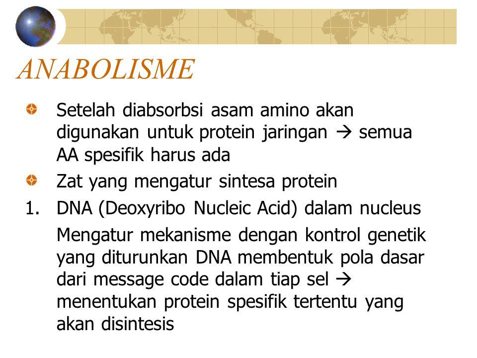 ANABOLISME Setelah diabsorbsi asam amino akan digunakan untuk protein jaringan  semua AA spesifik harus ada.