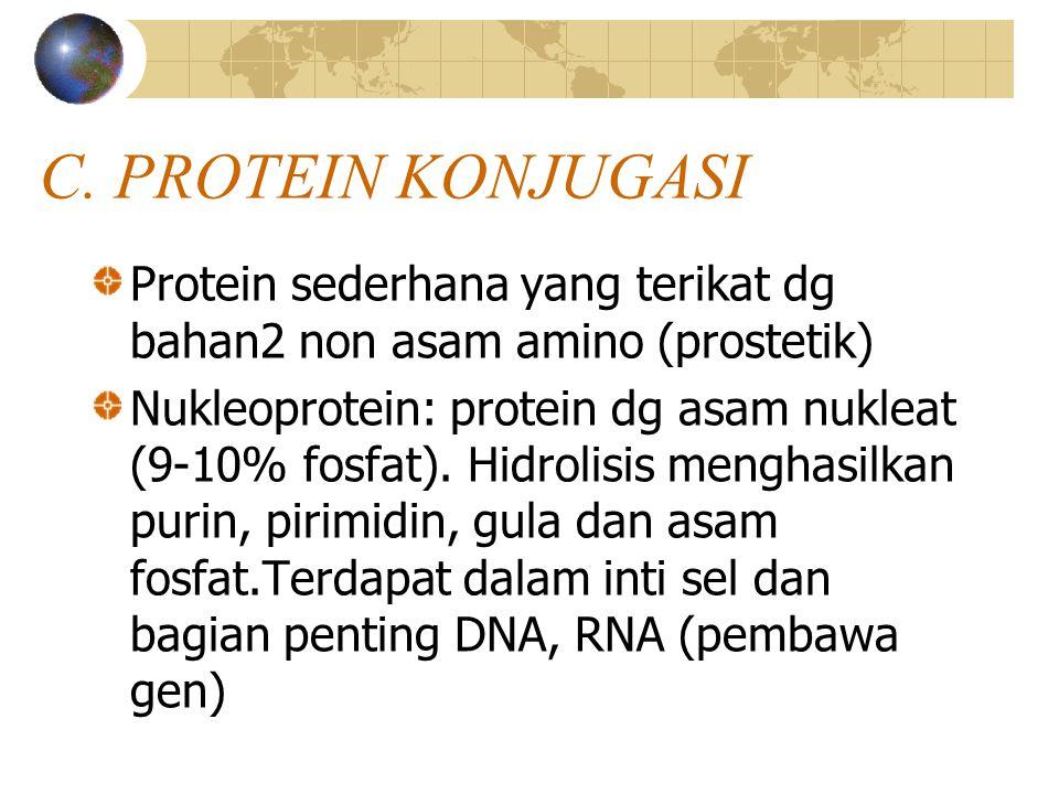 C. PROTEIN KONJUGASI Protein sederhana yang terikat dg bahan2 non asam amino (prostetik)