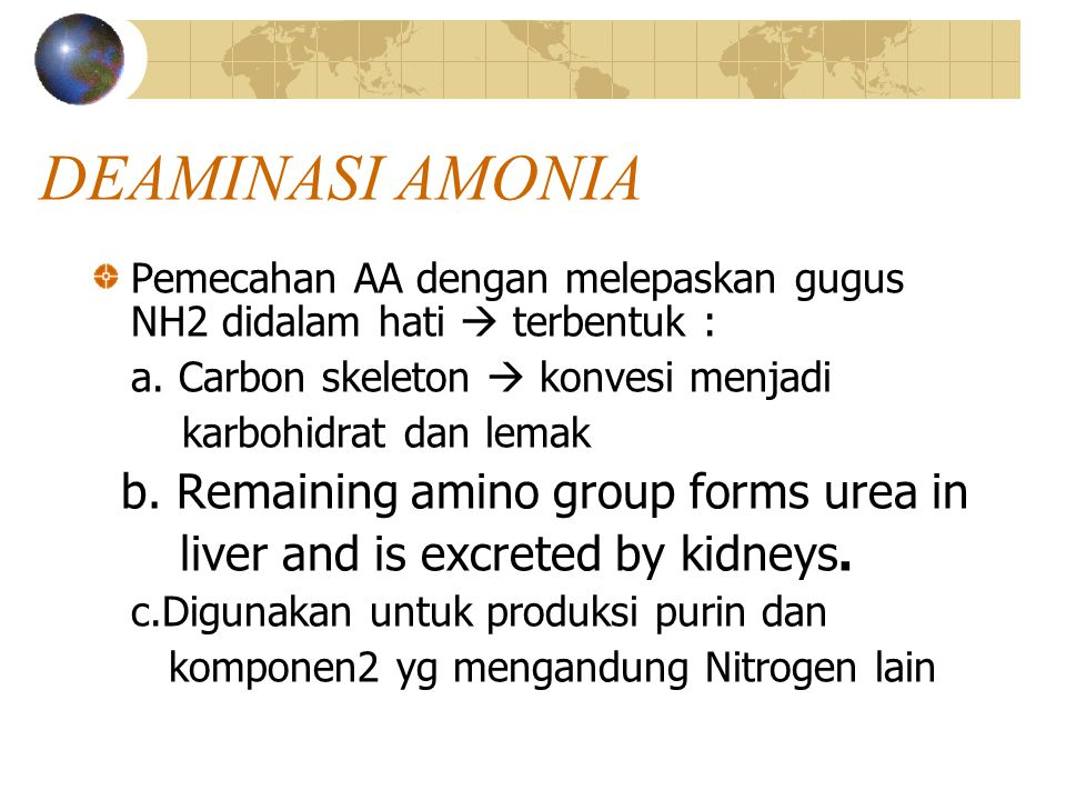 DEAMINASI AMONIA b. Remaining amino group forms urea in