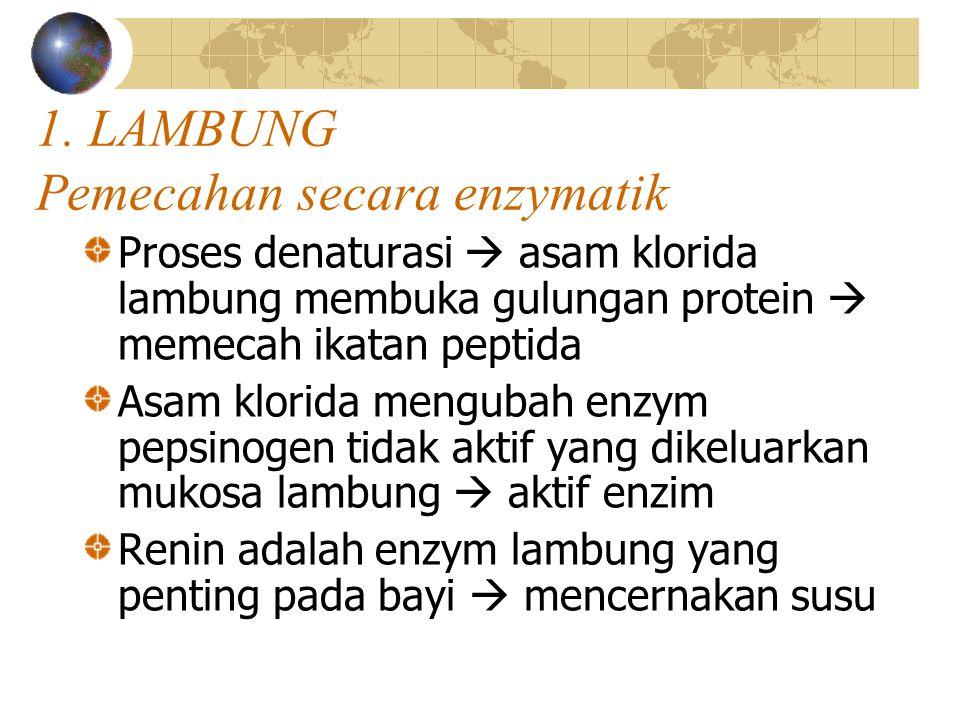 1. LAMBUNG Pemecahan secara enzymatik