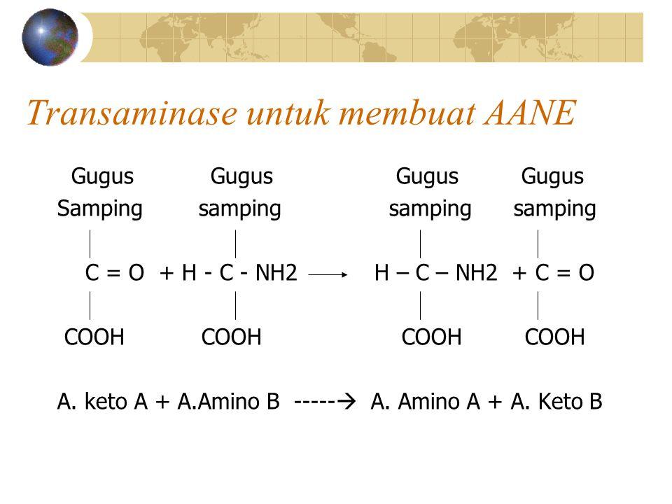 Transaminase untuk membuat AANE