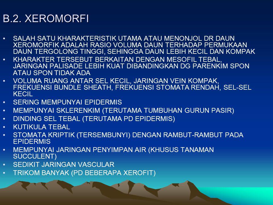 B.2. XEROMORFI