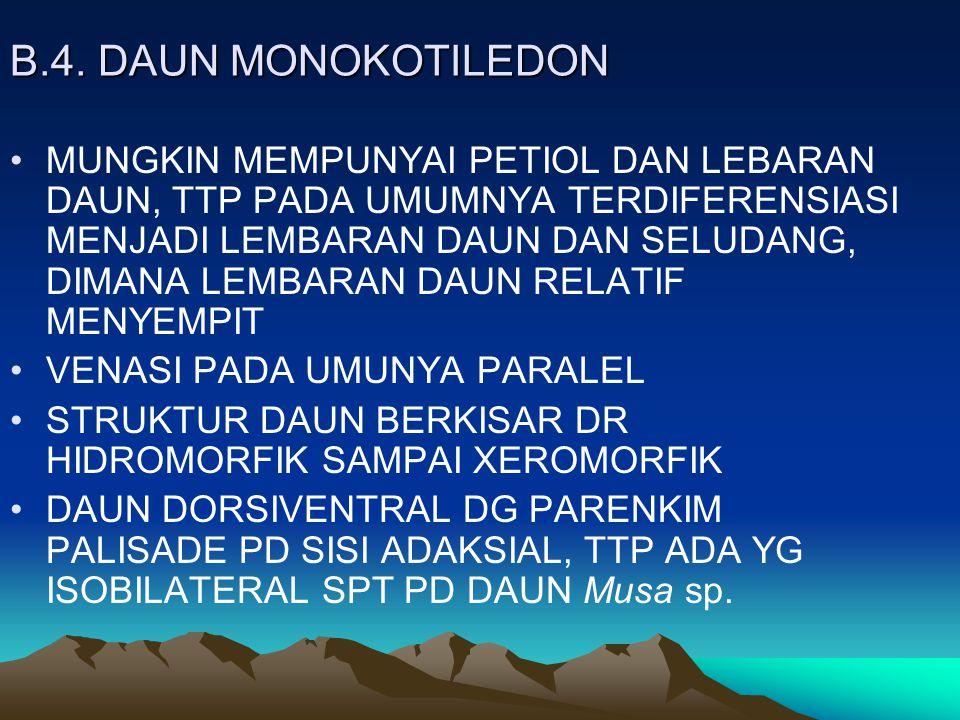B.4. DAUN MONOKOTILEDON