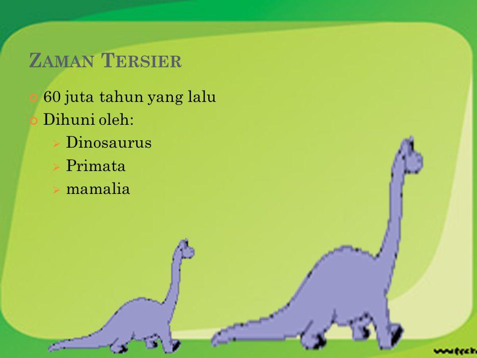 Zaman Tersier 60 juta tahun yang lalu Dihuni oleh: Dinosaurus Primata