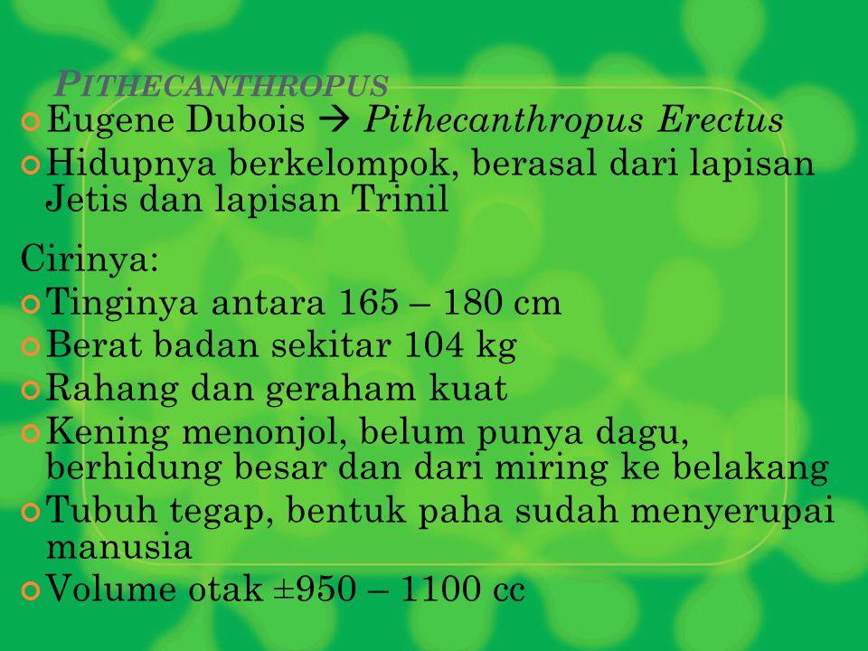 Eugene Dubois  Pithecanthropus Erectus