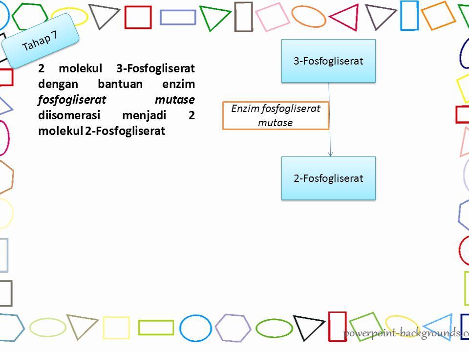 Enzim fosfogliserat mutase